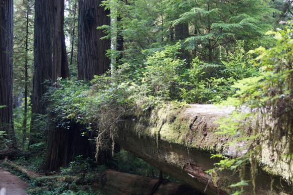 Life on a Fallen Tree